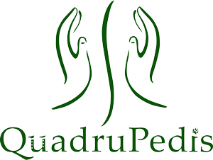 Quadrupedis - Physiotherapie